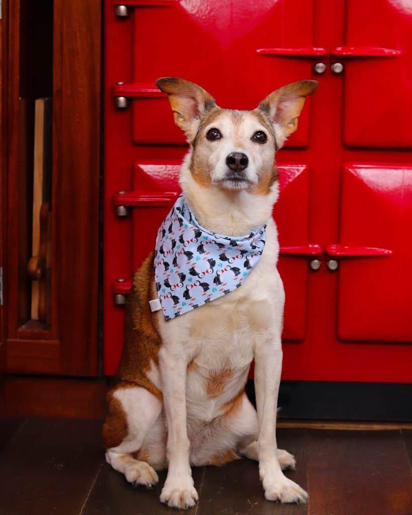 Woodfarm Barges Dog Friendly Suffolk