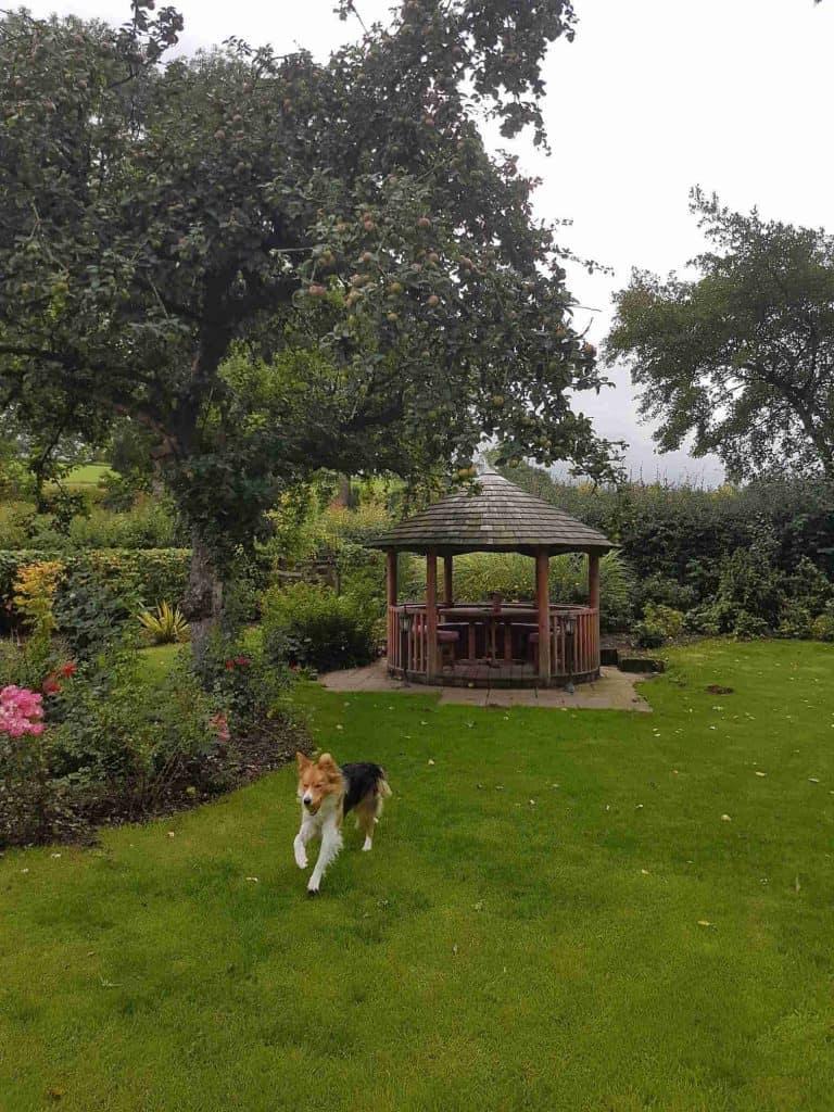Oldfields Farm Dog Friendly Ashbourne Peak District