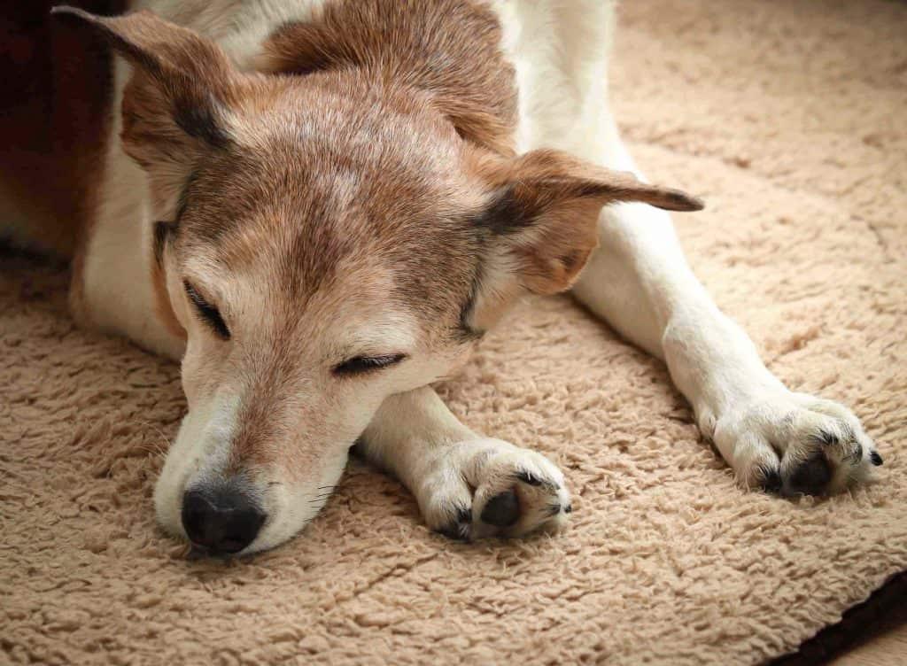 Crantock Bay Holiday Apartments Dog Friendly