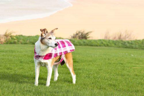 Crantock Bay Holiday Apartments Dog Friendly Cornwall