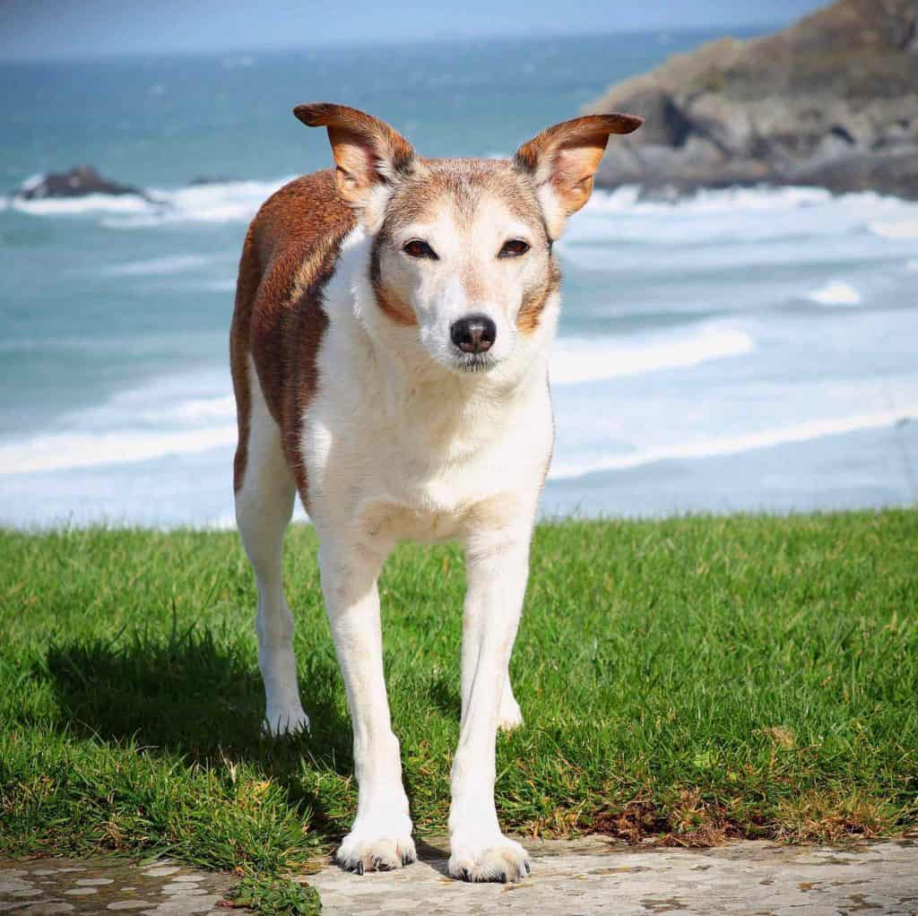 Crantock Bay Apartments Dog Friendly North Cornwall