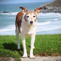 Crantock Bay Apartments Dog Friendly North Cornwall