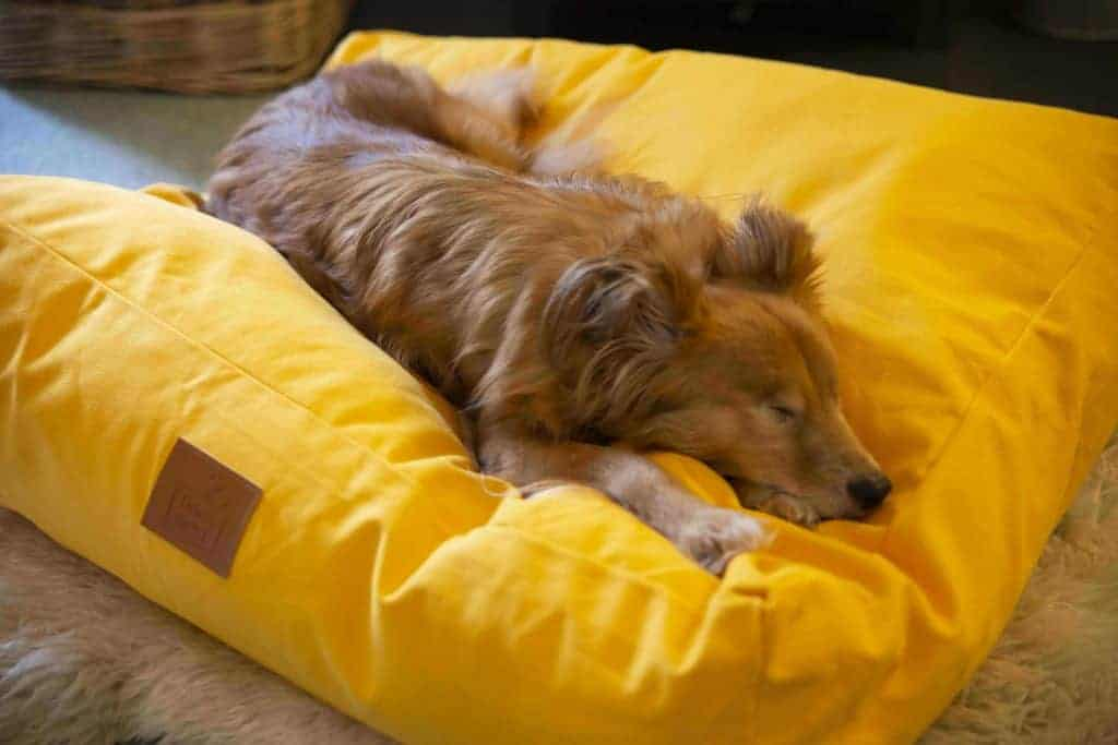 Fidos Nest Luxury Dog Beds