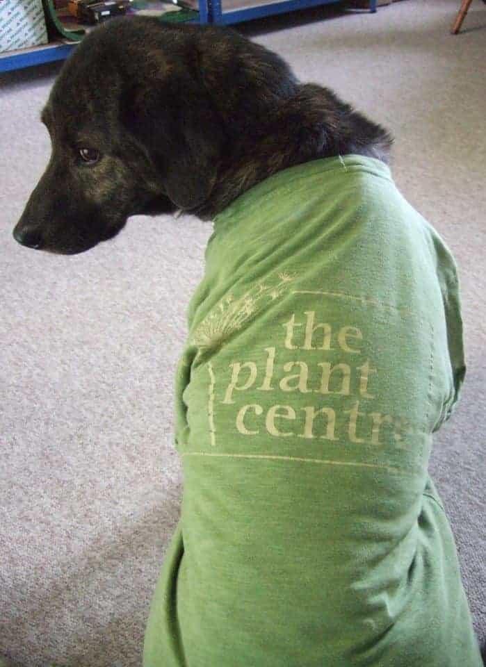 The Plant Centre Dog Friendly Ludlow