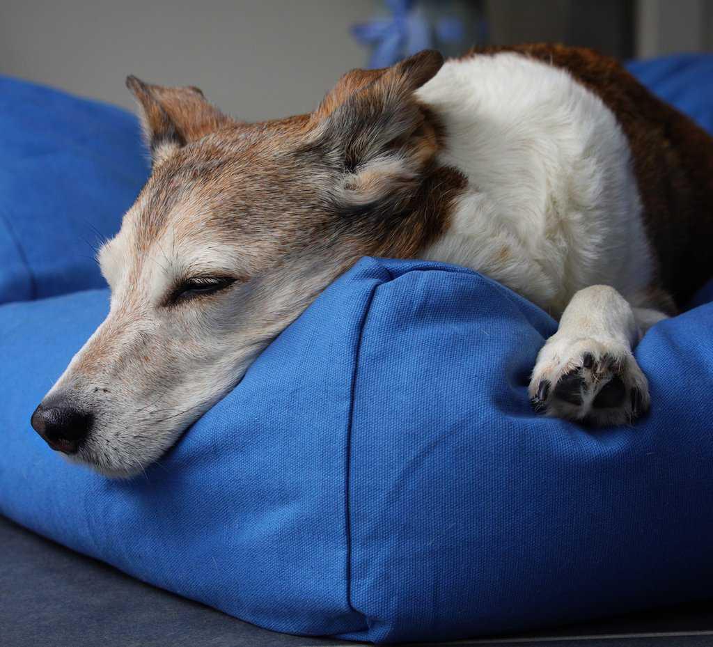 Fidos Nest Comfy Dog Bed