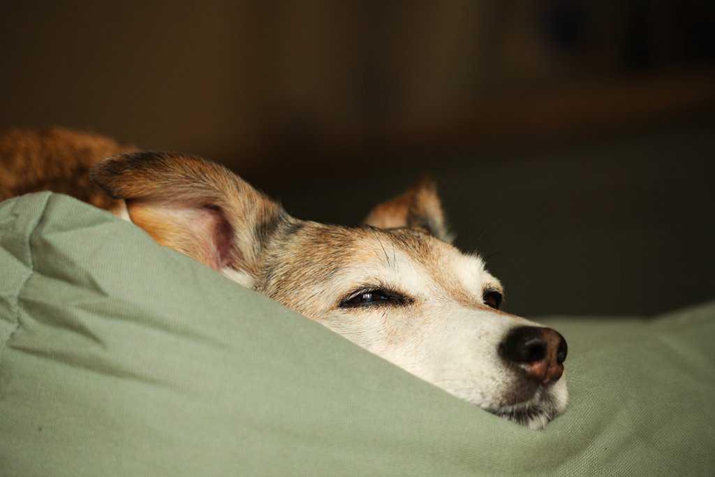 Fidos Nest Designer Dog Bed