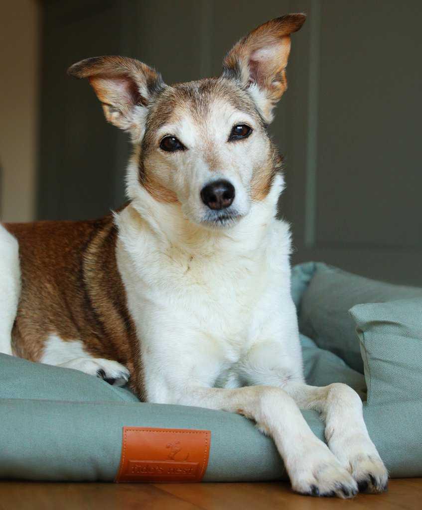 Fidos Nest Dog Bed