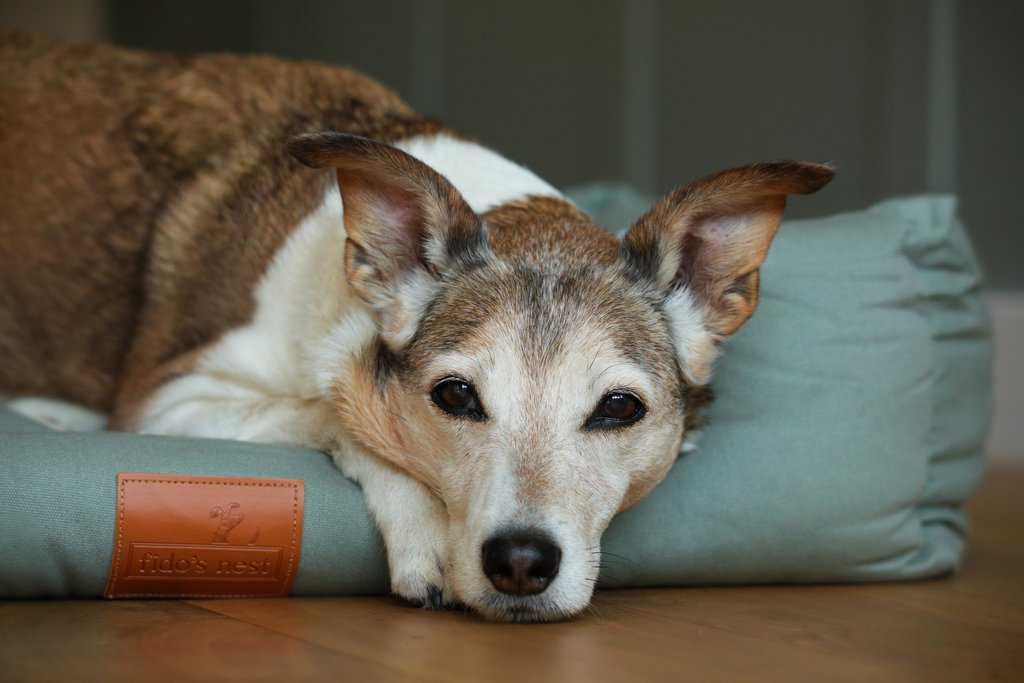 Fidos Nest Luxury Dog Bed