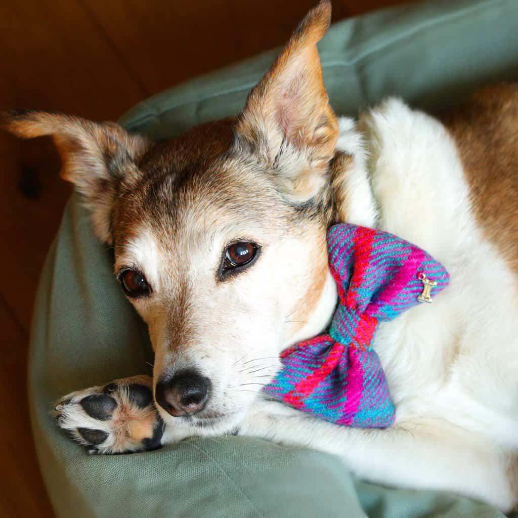 Fidos Nest Stylish Dog Bed