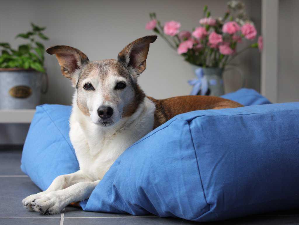 Fidos Nest Blue Pillow Dog Bed