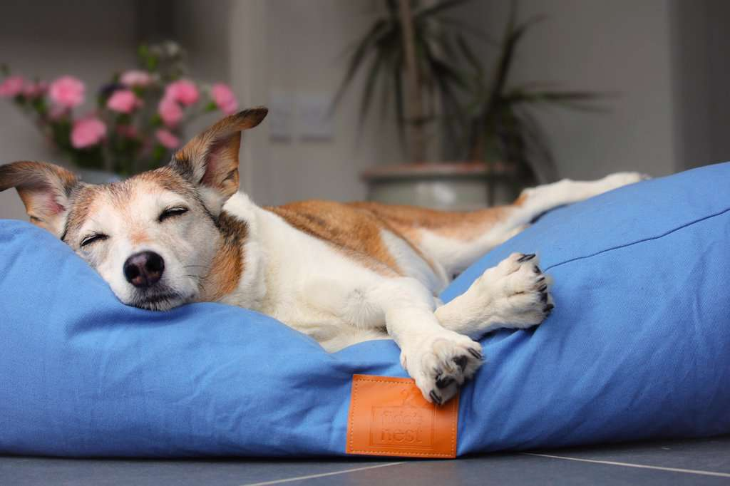 Fidos Nest Luxury Pillow Dog Bed