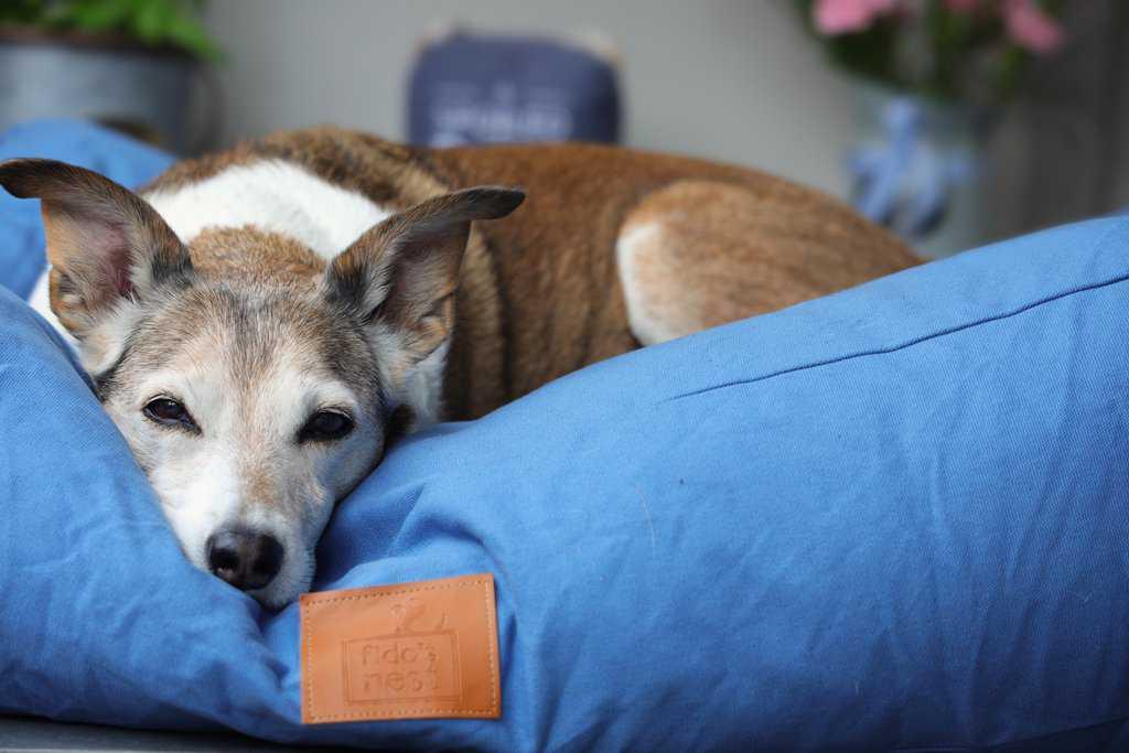 Fidos Nest Pillow Dog Bed