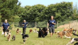 Doggy Day Care Dog Sitters Cornwall