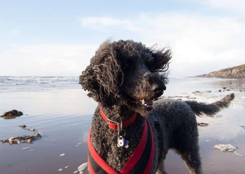 Dog friendly holiday accommodation in SW Scotland.jpg