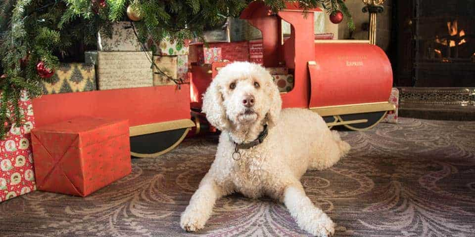 Bovey Castle Hotel Pet Friendly Devon