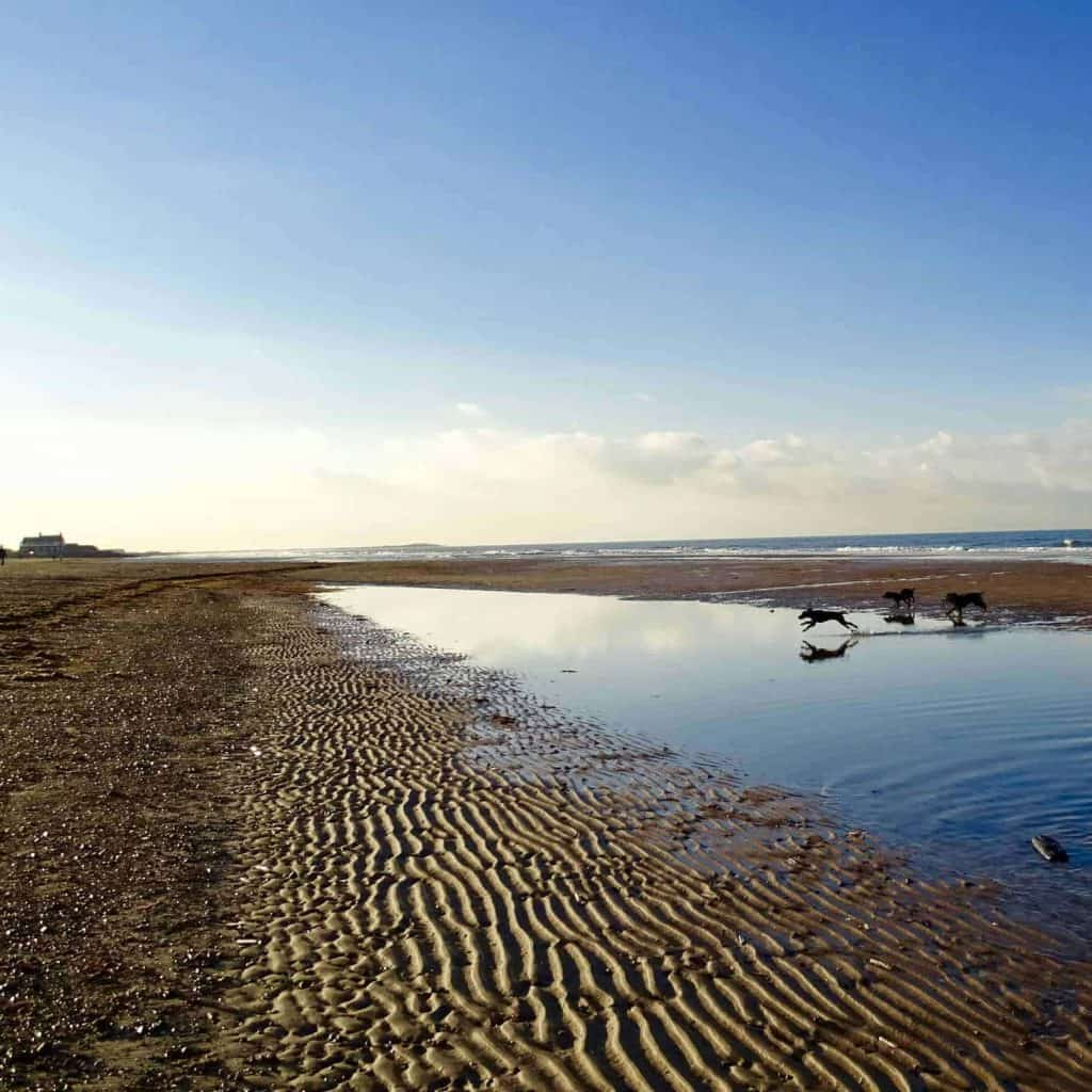 North Norfolk Holiday Cottages Pet Friendly