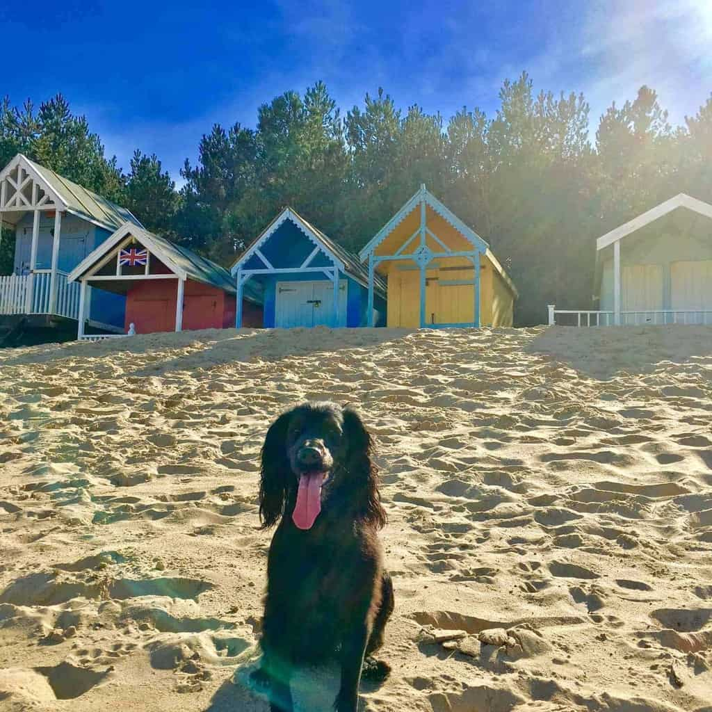 North Norfolk Dog Friendly Holiday Cottages