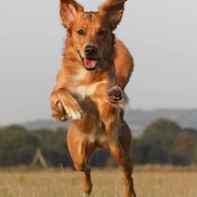 Autarky Grain Free Hypoallergenic Dog Food