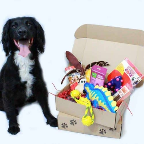 Boxes By Buddy The Fun Monthly Subscription Box for Your Dog