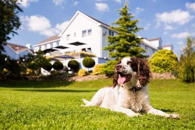 The Plough Rhosmaen Dogfriendly Garden.jpg