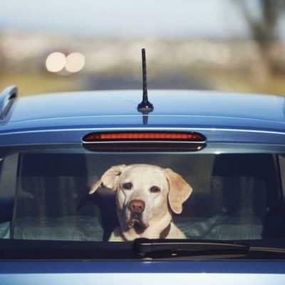 Pets Lets Dog Friendly Accommodation London
