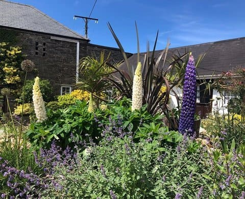 Trenale Court Holiday Cottages Dog Friendly Cornwall
