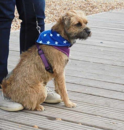 Kelstitch Design Dog Bandana