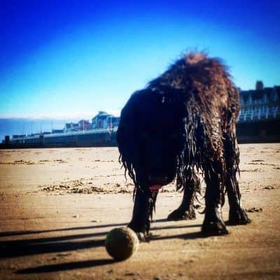 Yappy Days Dog Friendly Seaside Holidays with Darwin Escapes