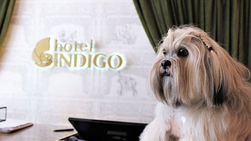 Hotel Indigo Dog Friendly Kensington