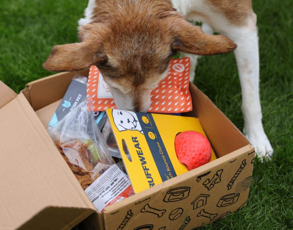 Collar Club Subscription Box for Dogs