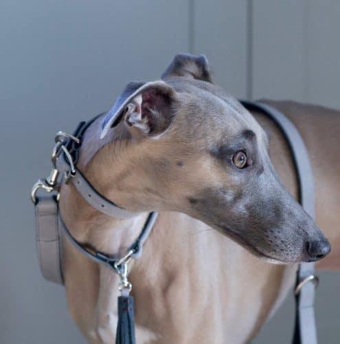 The Velveteen Hound Luxury Hound Collars