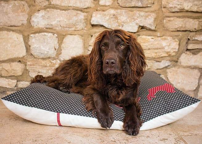 Slumbering Hound Luxury personalised dog beds.jpg