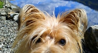 Dog Friendly Little Briar Cottage Maisey