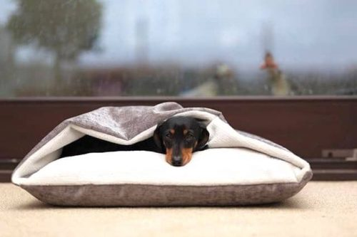 Designed For Dogs Dog Beds