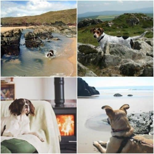 Dog friendly Cottages Pembrokeshire.jpg