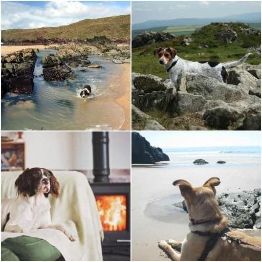 Dog friendly Cottages Pembrokeshire.jpg