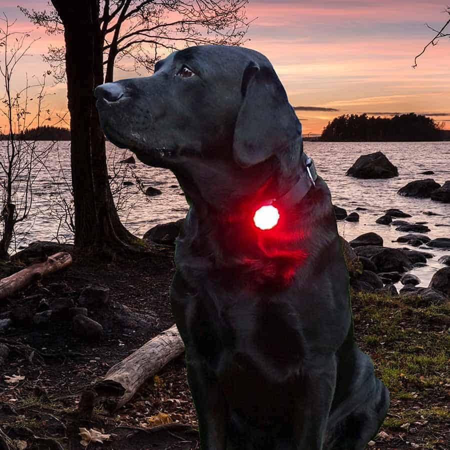 K9 Active Dog Safety Collars