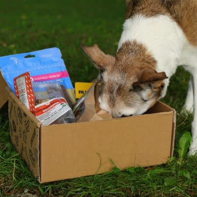 Collar Club Eco Friendly Subscription Box for Dogs