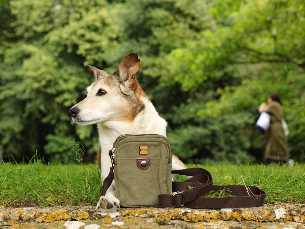 The Dandy Dog Company Dog Walking Bag
