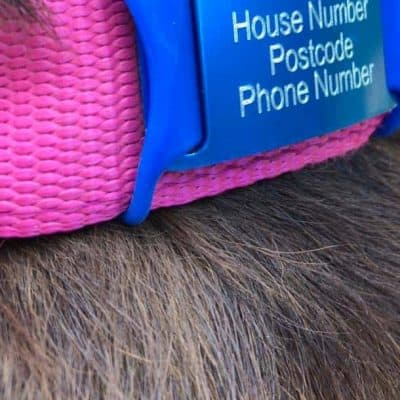 Flexitags Identity Tags for Dogs