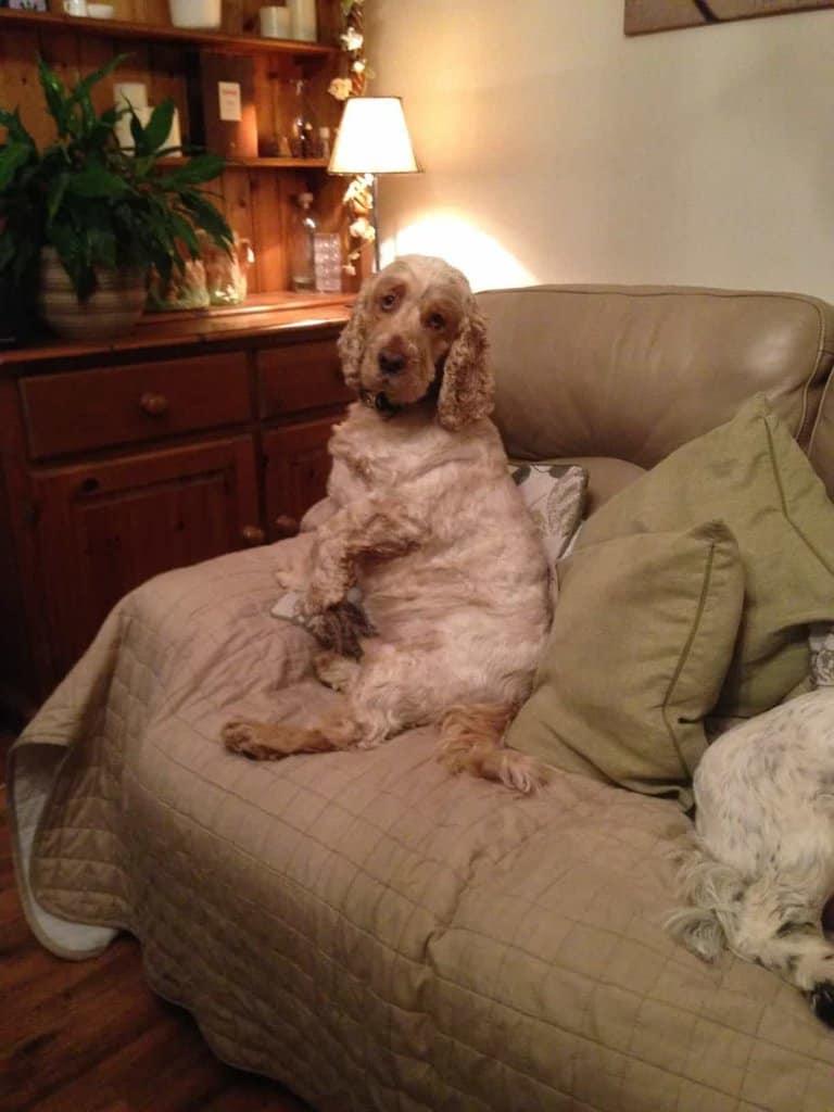 Barking Mad Huddersfield dog sitting.jpg