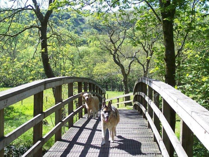 Craig y Nos Castle Pet Friendly Brecon Beacons