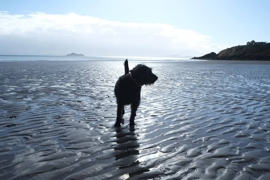 The Nethergate Dog Friendly Accommodation Fife