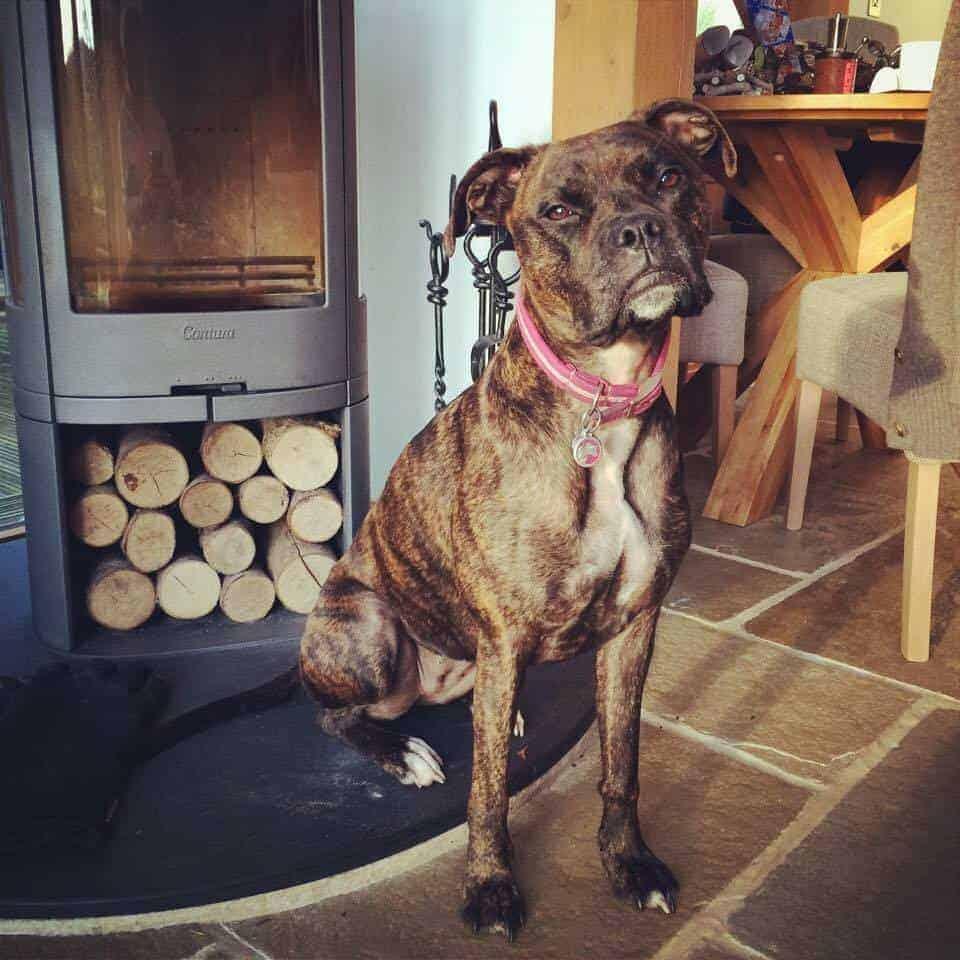 Brecon Retreat Luxury Dog Friendly accomodation Brecon.jpg