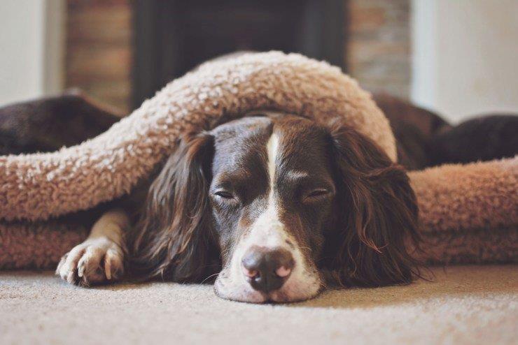 Slumbering Hound Luxury handmade snuggle sacks for dogs.jpg