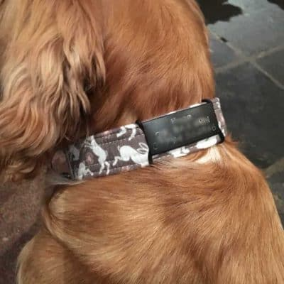 Flexitags Identity Tags for Dog Collars