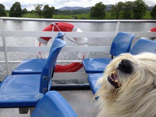 Windermere Lake Cruises Dog Friendly