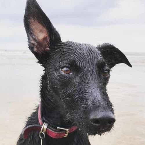 Ottie and Co Pet Sitting and Dog Walking Chippenham