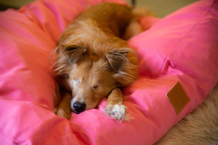 Fidos Nest Luxury Dog Beds Pink