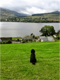 Dog Friendly Little Briar Cottage -admired by Oscar cockapoo